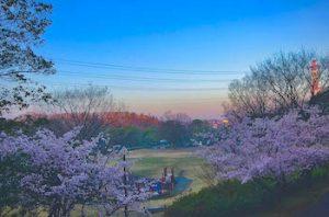 ふるさと公園の朝日