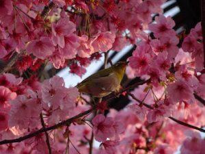 白鳥神社の春