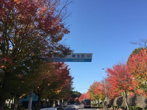 A093 ようこそ紅葉の街へ 三田 晴之 虹ヶ丘3丁目 2020/11/11