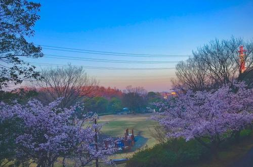 A030 ふるさと公園の朝日 COCO 王禅寺ふるさと公園 2020/03/01