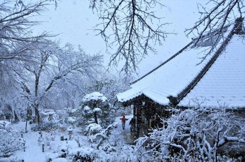 A146 雪降る淨慶寺 ボンタン 淨慶寺 2013/01/14