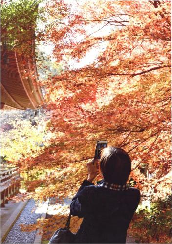 A195 錦秋の古刹 ワーちゃん 王禅寺 2020/12/08