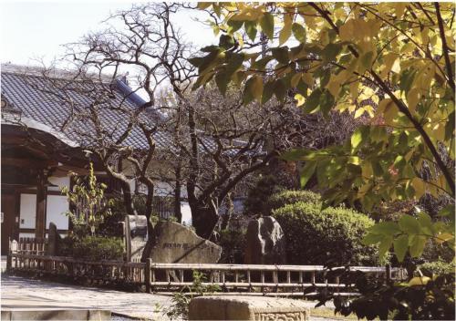 A103 秋の禅寺丸柿原木 戸澤 昌之 王禅寺 2020/12/01
