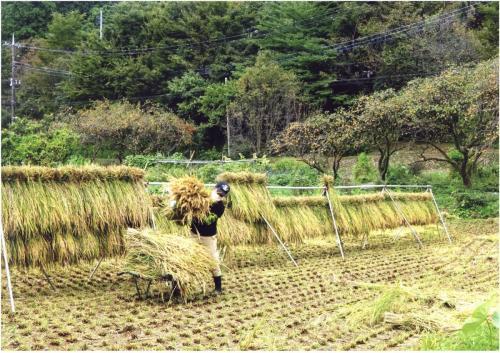 A185 農作業はベテランの技 木村 康則 麻生区黒川 2020/10/04