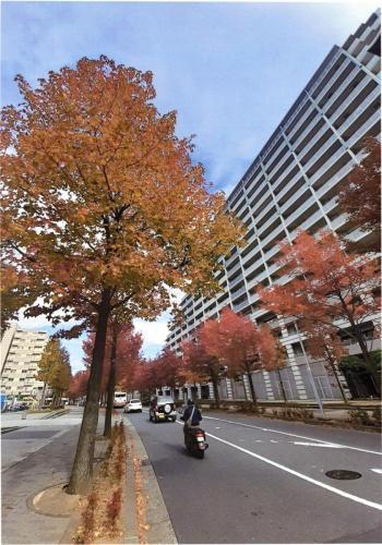 A124 街の中で紅葉を感じる 林 秀一郎 新百合山手中央通り 2020/11/07