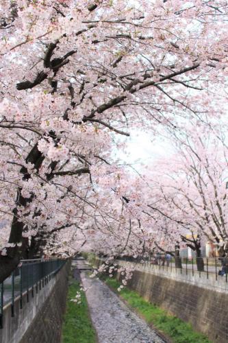 A089 春色 三野 ゆかり 麻生川 2016/04/06