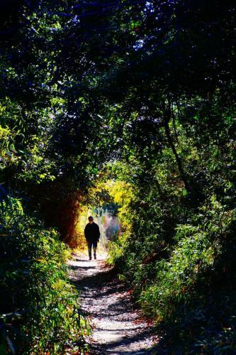 A091 陽だまりのある散歩道 コニタン 王禅寺ふるさと公園 2021/01/09