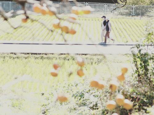 A007 柿の里を往く 小宮 圭一 麻生区黒川 2020/10/31