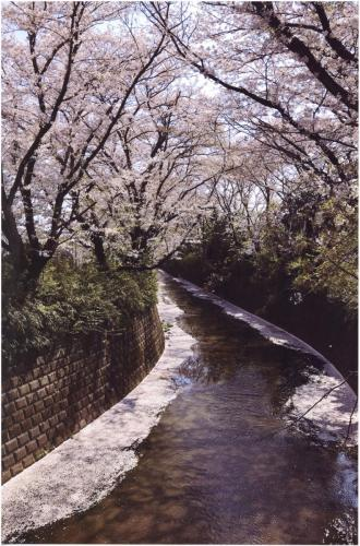 A236 コロナ禍の麻生川 村井 洋子 麻生川 2020/04/04