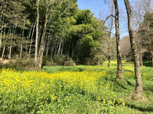 A034 早野の春 菜の花 yumirin 早野 2020/03/21