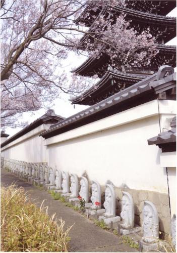 A193 桜の木の下の観音様 佐野 寿男 香林寺 2020/03/22