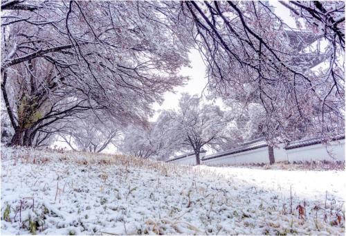 A181 春雪(1) 義一 香林寺 2020/03/29