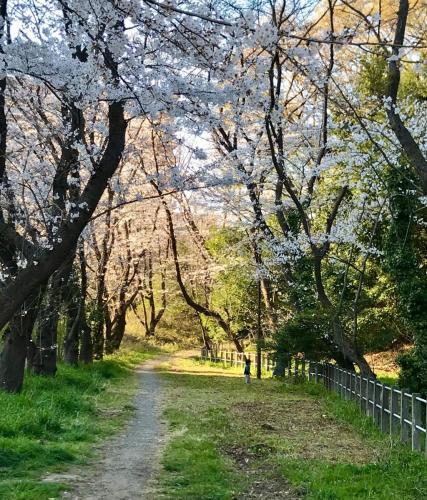 A040 白山の春 yumirin 白山神社脇 2019/03/04