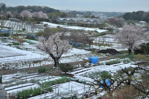 A227 里 TOM 岡上営農団地 2020/03/30