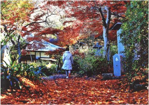 A199 煌めく紅葉じゅうたん 山田 康元 麻生区 浄慶寺 2018/11/20