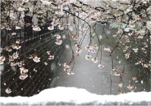 A167 季節の交差麻生川 ラン蔵 麻生川 山口橋 2020/03/29