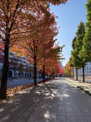 C016 秋の香り Mirei 新百合ヶ丘北口駅前通り 2020/11/14