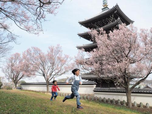 A162 春の訪れ 芝村 良 香林寺 2020/03/22