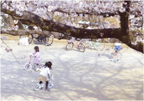 A192 桜の木の下で 佐野 寿男 百合丘第2児童公園 2020/03/22