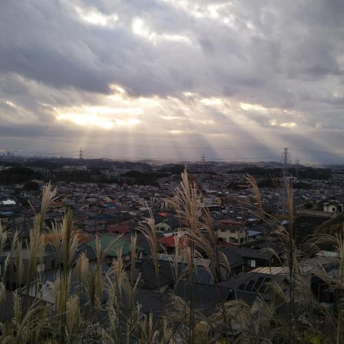 A018 天使が舞い降りた瞬間 りんりん 王禅寺見晴し公園 2020/11/12