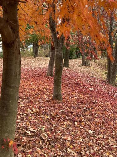 A036 グラデーションの散歩道 麻生の散歩びと 万福寺さとやま公園 2020/12/13