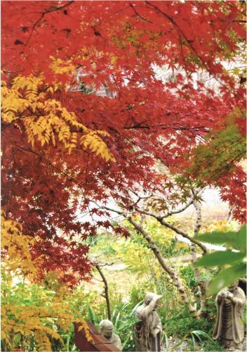 A116 羅漢紅葉 渡辺 忠雄 浄慶寺 2020/12/10