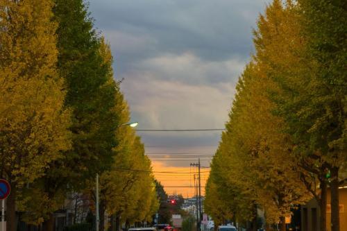 A041 銀杏並木の夕暮れ Kazu(カズ) 五月台駅前 2020/11/09