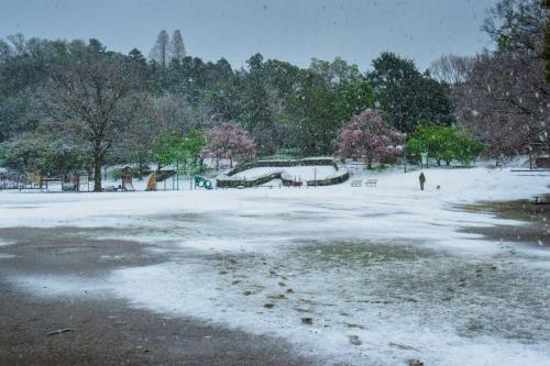 A132 ふるさと公園春雪 王禅寺ひろし 王禅寺ふるさと公園 2020/03/29