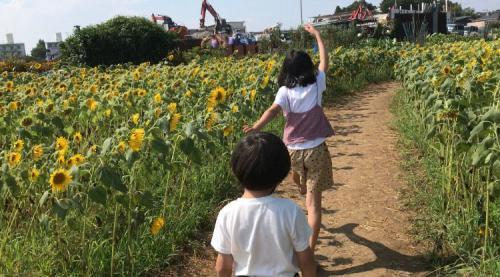 A155 ひまわり畑でダンス オトーサン 早野ひまわり畑 2020/08/17