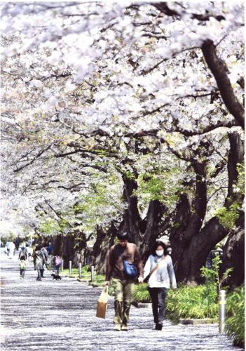 A118 春の散歩道 60の手習 麻生川 2020/04/04